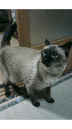 実家の猫.jpg