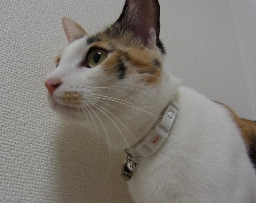 20110801ブログ_すず③.JPG