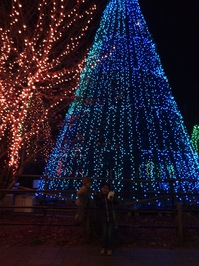 2014.12.20shiki-blog7.JPG