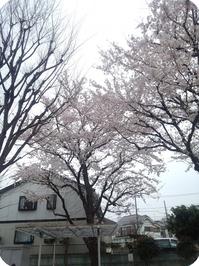 20150403hoya01.jpg