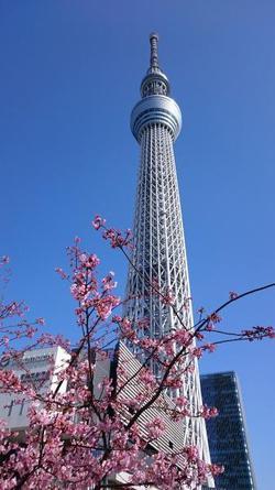 29.2.25shiki-blogスカイツリー.jpg