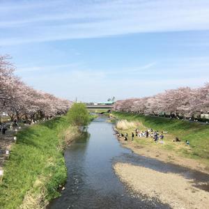 29.4.8shiki-blog2.jpg