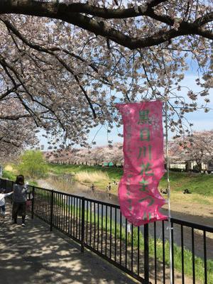 29.4.8shiki-blog4.jpg