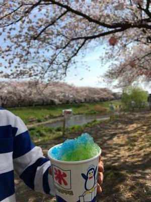 29.4.8shiki-blog5.jpg