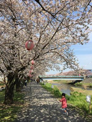 29.4.8shiki-blog7.jpg
