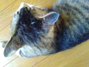 chiba猫③.JPG