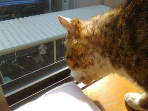 chiba猫④.JPG