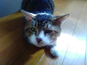 chiba猫⑤.JPG