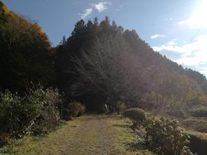 29.12.3shiki-blog登山道.jpg