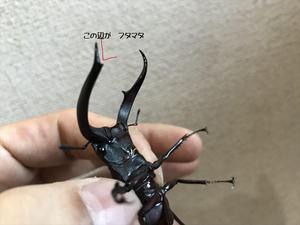 20171210鈴木マンディブ2_R.JPG