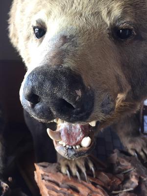 20180902岩沢クマの顔.JPG
