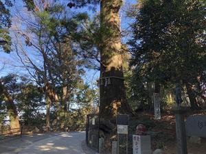 7、高尾山たこ杉.jpg