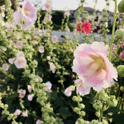 20190623宮平お花1.jpg